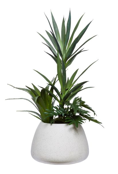 YUCCA X 2 COMBO IN WHITE POT