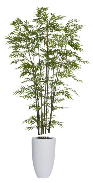 9.5' GREEN BAMBOO IN TALL WHITE POT