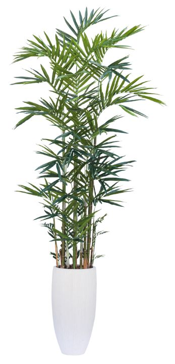 12' DELUXE KENTIA PALM IN TALL WHITE RIBBED POT  ( THIS ITEM IS OUT OF STOCK UNTIL 9/10/19 )