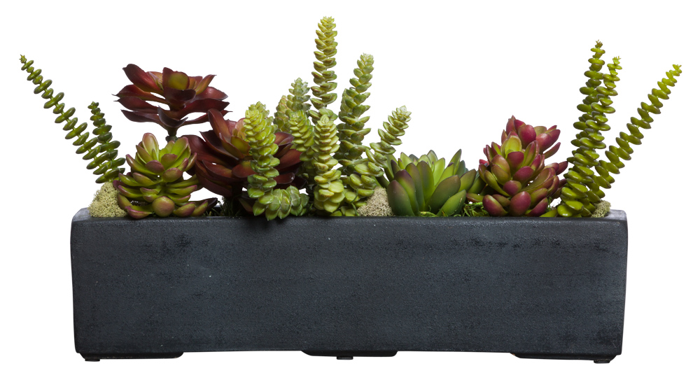 ASST SUCCULENT IN SM BLACK RECTANGLE POT