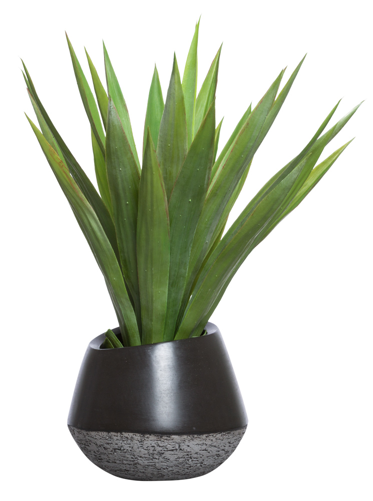 YUCCA IN BLACK VIBE BOWL