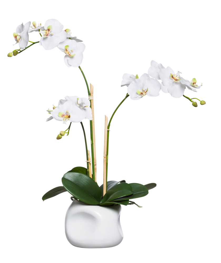 WHITE PHAL IN WHITE DIMPLE POT