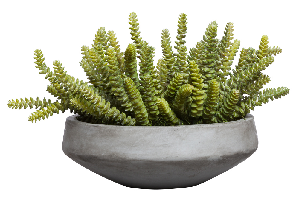 DONKEY TAIL SUCCULENT IN GREY BOWL