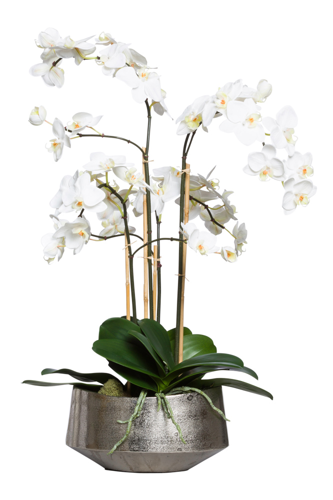 WHITE PHAL IN SMALL SILVER OVAL