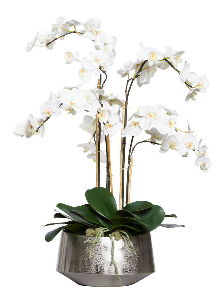 WHITE PHAL IN LARGE SILVER OVAL