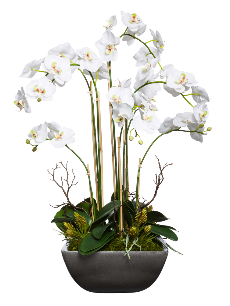 WHITE PHAL IN SQUARE POT