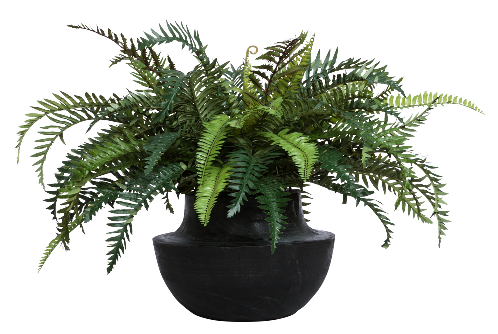 FERN IN BLACK WOOD BOWL