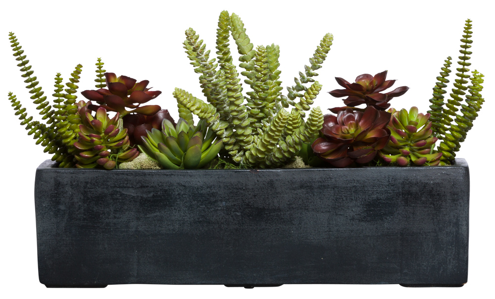 ASST SUCCULENT IN BLACK RECTANGLE