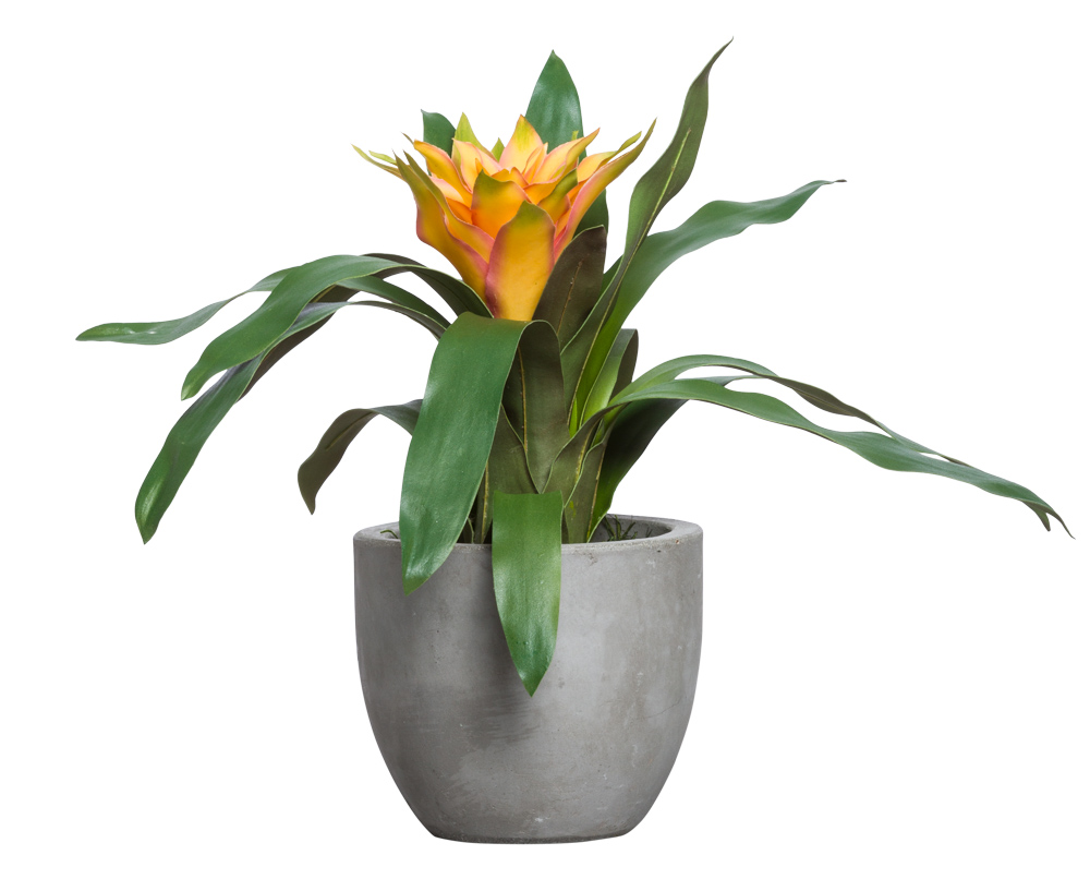 GOLD BROMELIAD IN SMALL BOWL