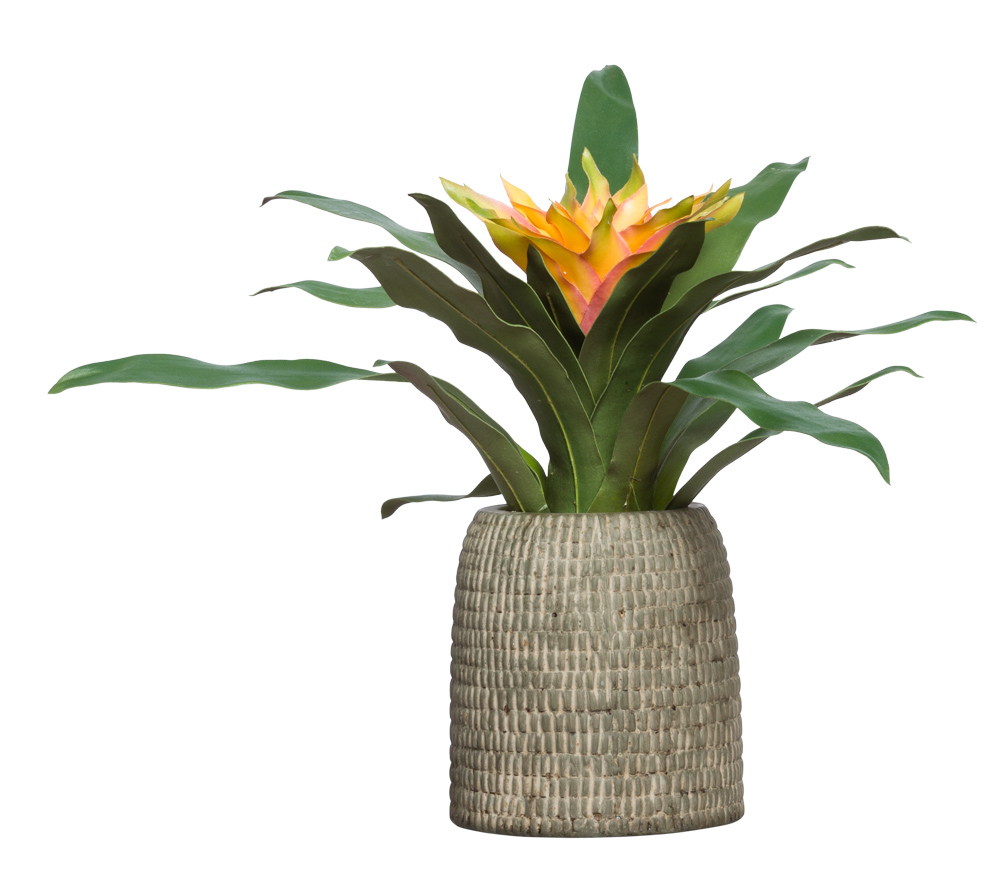 GOLD BROMELIAD IN BROWN POT