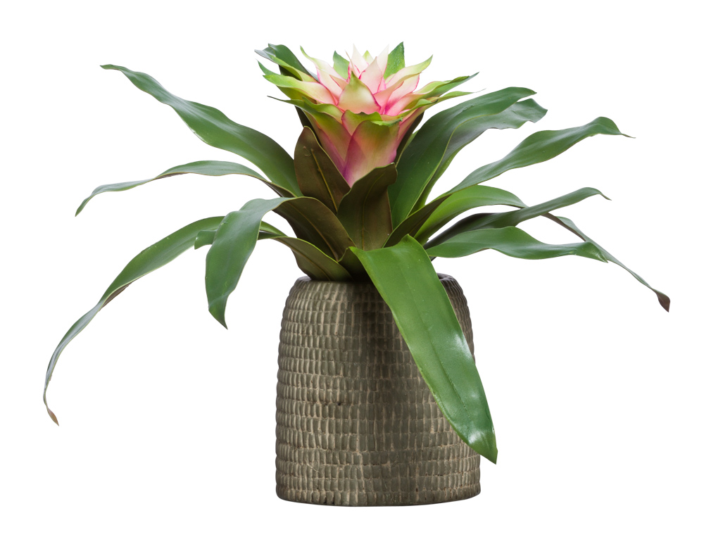 MAUVE/GREEN BROMELIAD IN BROWN BOWL
