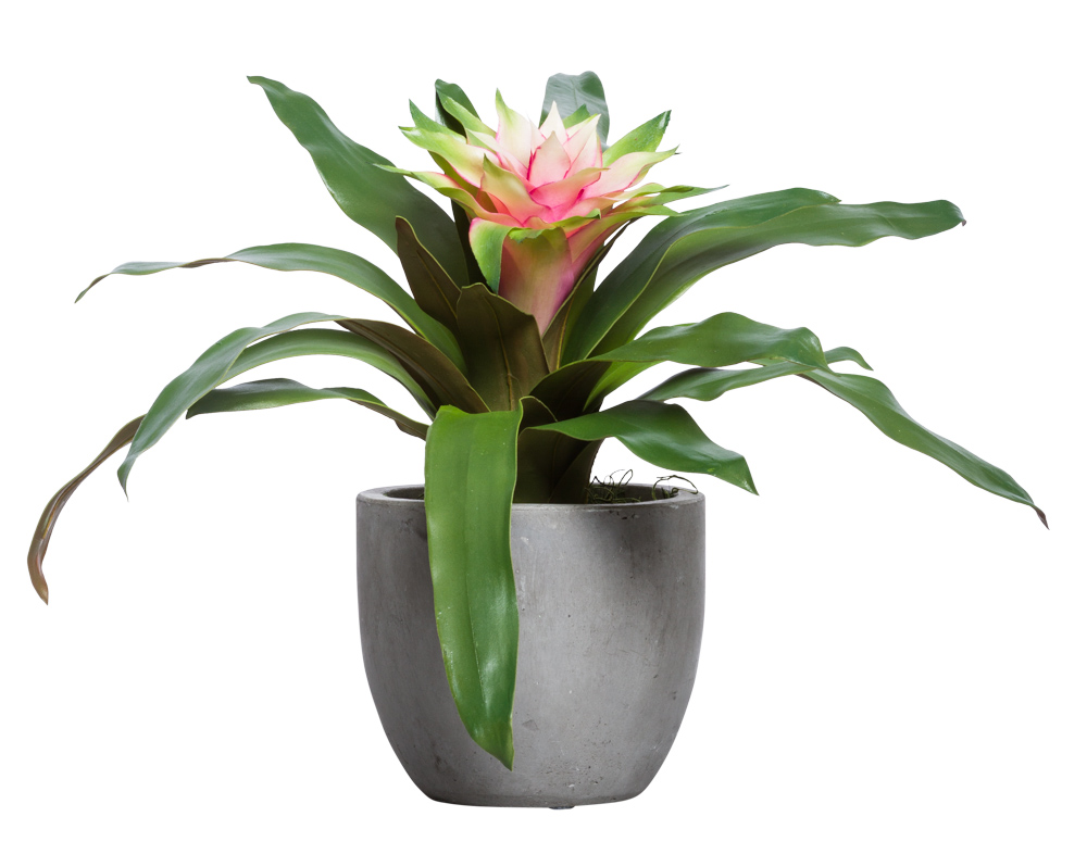 MAUVE/GREEN BROMELIAD IN SMALL BOWL