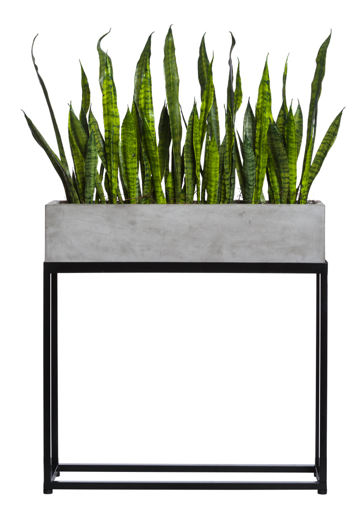 SNAKE PLANT IN RECTANGLE PLANT STAND