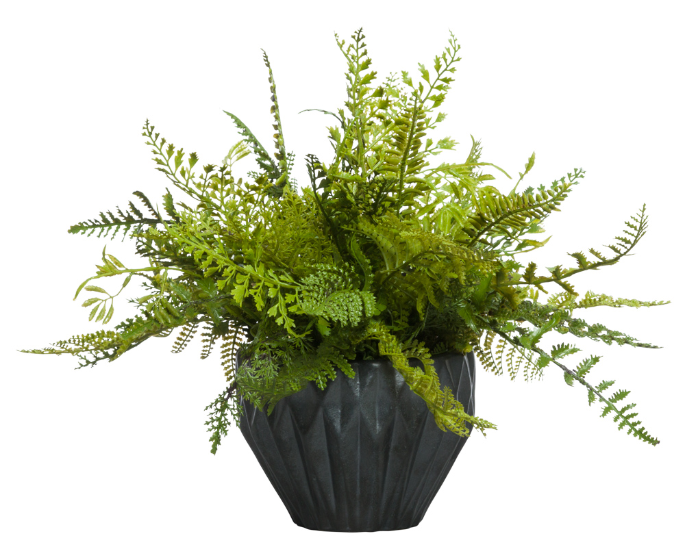 MIXED FERN IN BLACK POT