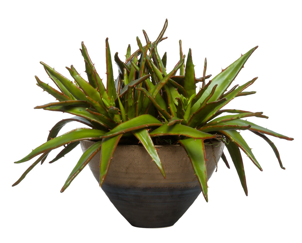 ALOE IN TWO TONE BRONZE POT