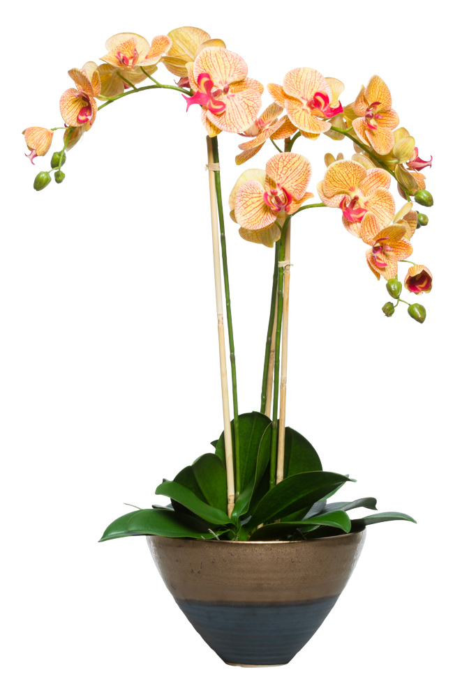 CORAL PHAL IN TWO TONE BRONZE POT