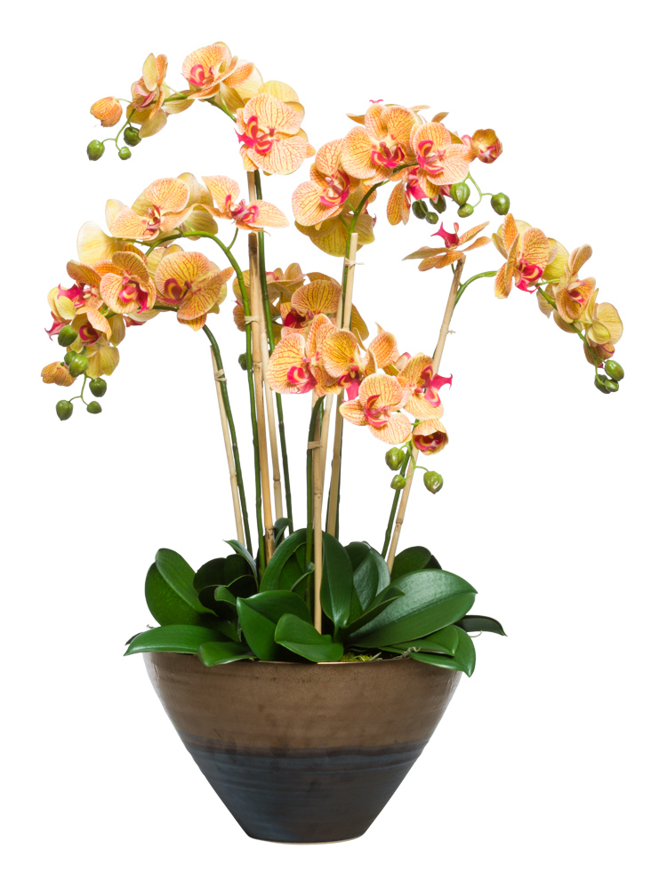 CORAL PHAL IN LRG TWO TONE BRONZE POT