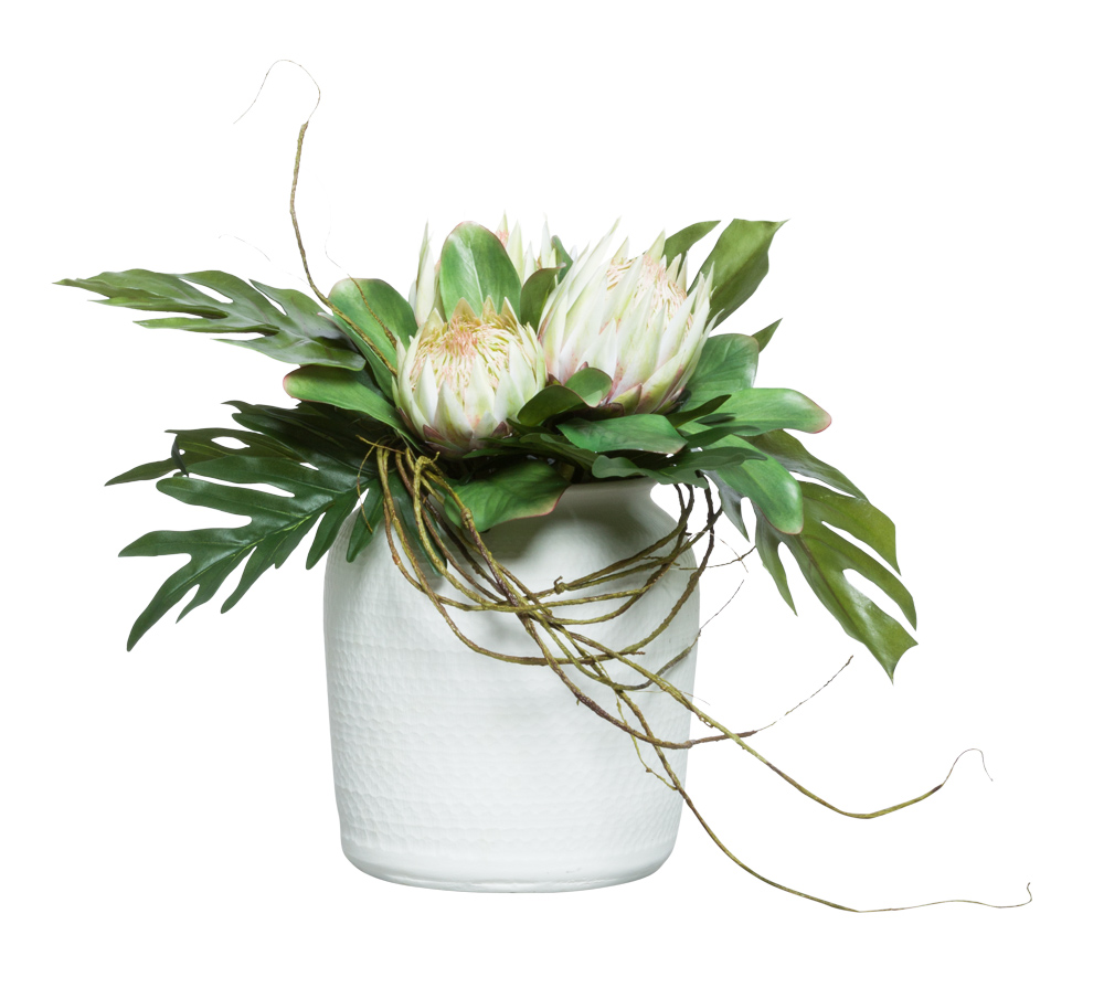 GREEN PROTEA IN WHITE POT