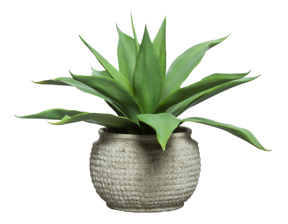 LARGE AGAVE IN GREY POT