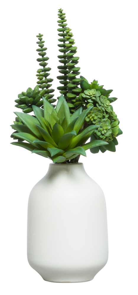 SUCCULENT BUNDLE IN WHITE POT