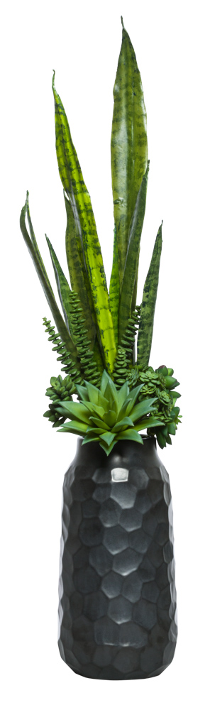 SUCCULENT BUNDLE/SNAKE PLANT IN BLACK POT