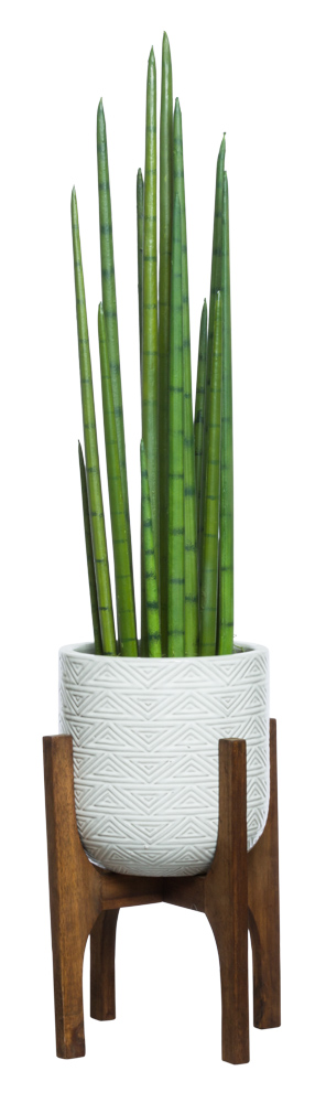 SNAKE PLANT IN WHITE TEXTURED PLANT STAND