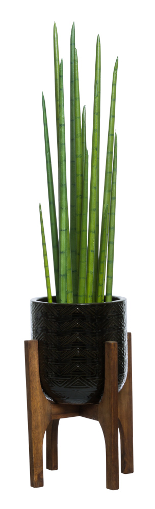 SNAKE PLANT IN BLACK TEXTURED PLANT STAND