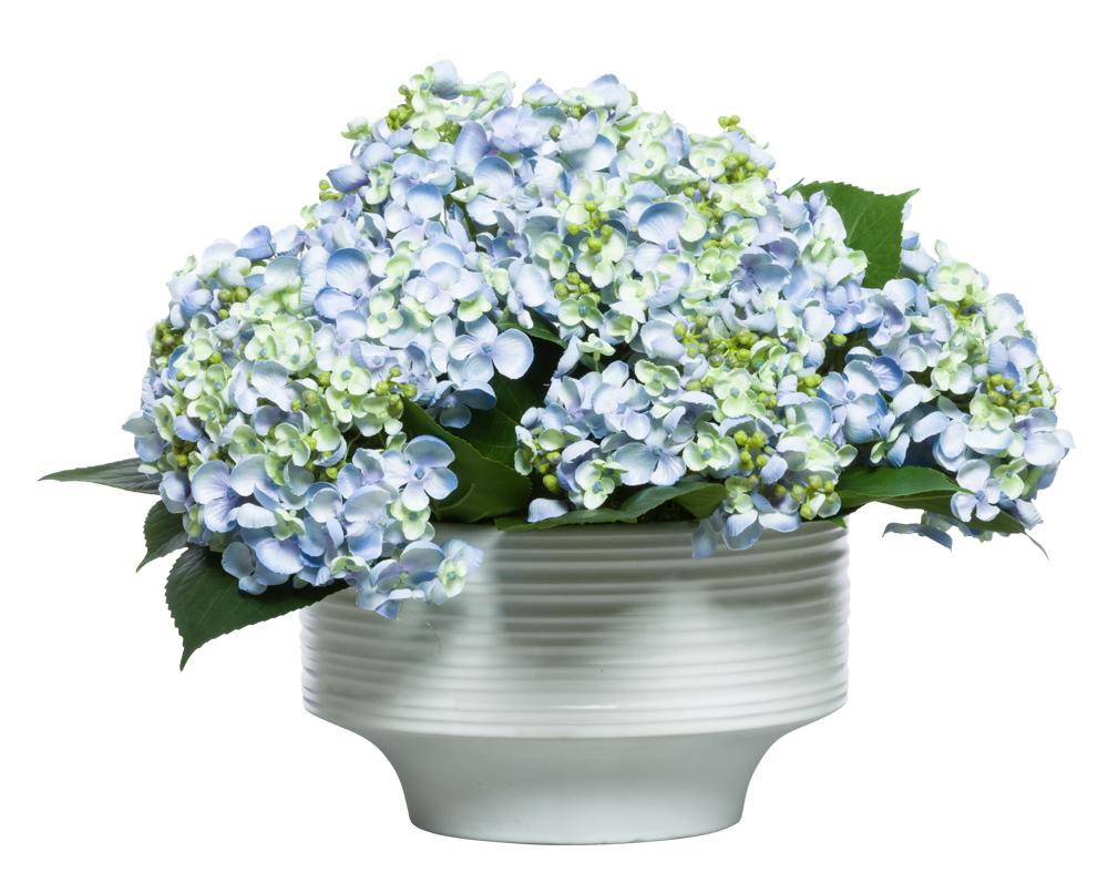 BLUE/GREEN HYDRANGEA IN WHITE BOWL