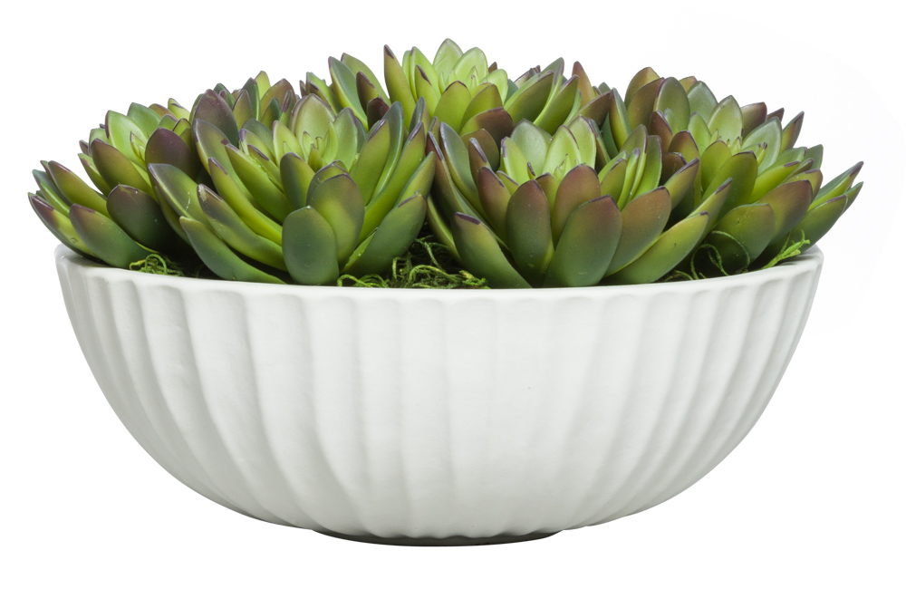 SUCCULENT IN SMALL WHITE BOWL
