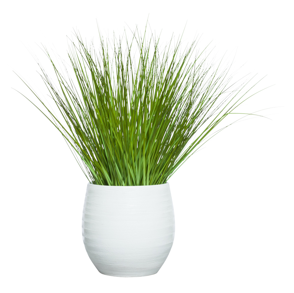GRASS IN WHITE BENJI POT