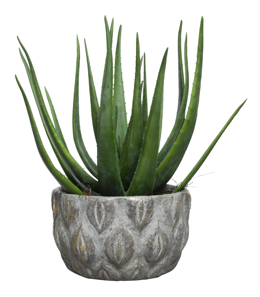 LARGE ALOE IN GOLD TRIM POT