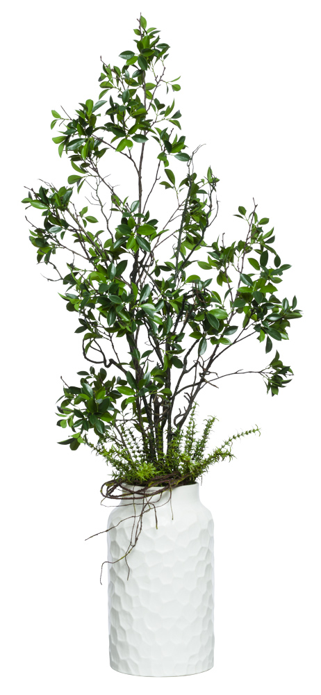 ASIAN FICUS IN TALL WHITE POT