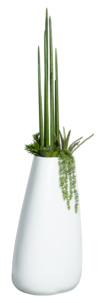SNAKE PLANT/ALOE COMBO IN TALL WHITE POT