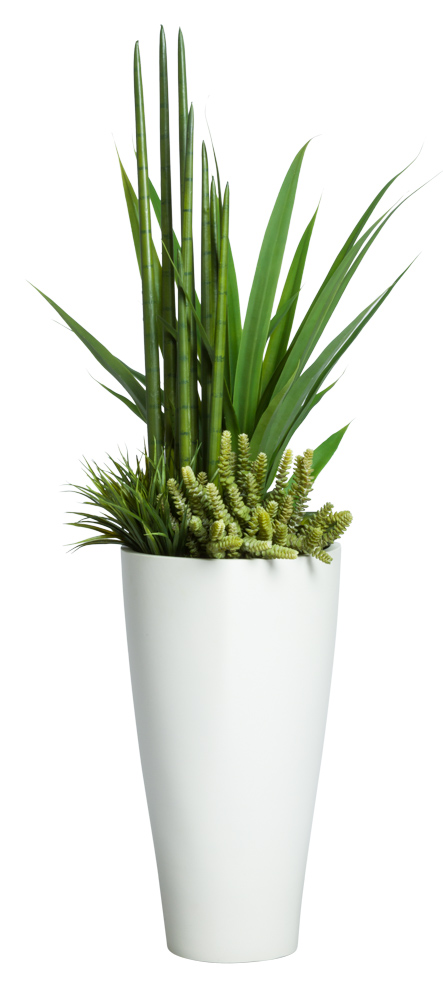 YUCCA/SNAKE PLANT COMBO IN TRIANGLE POT