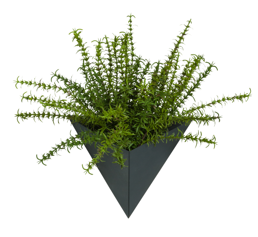 THYME IN SMALL BLACK WALL SCONCE