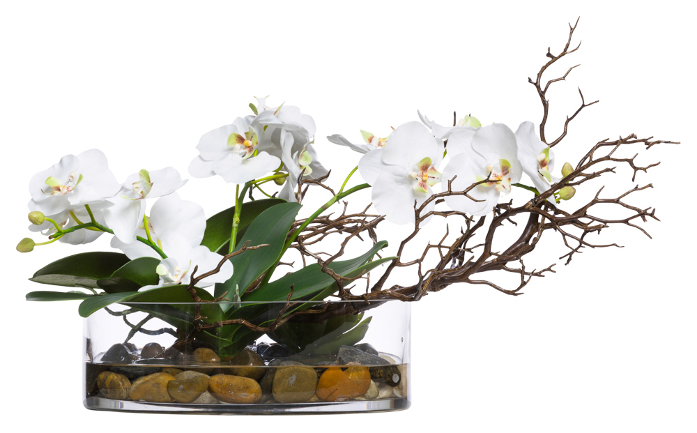 WHITE PHAL/MANZANITA WATER LIKE