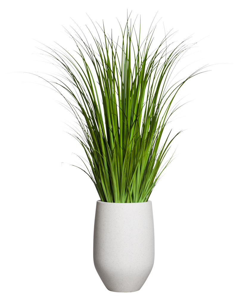 5' WILD GRASS IN WHITE POT