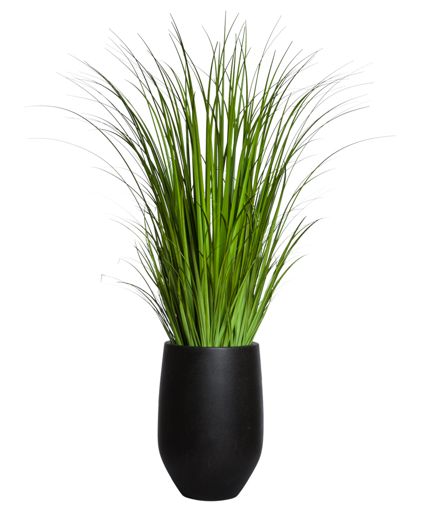 WILD GRASS IN BLACK POT