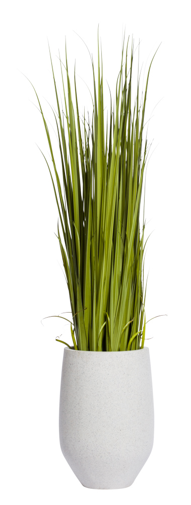 7' GLADIOLUS GRASS IN WHITE POT