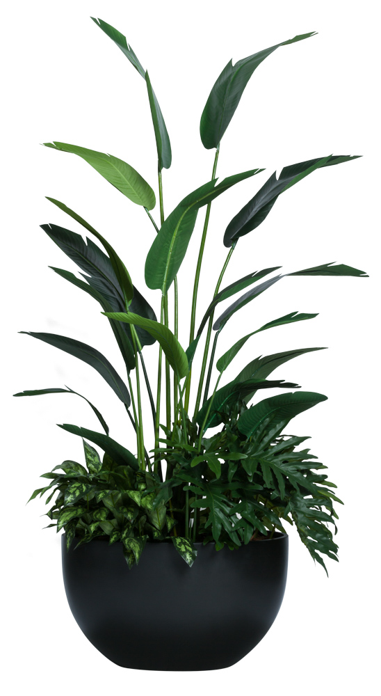 7.5' TRAVELERS PALM COMBO IN BLACK OVAL