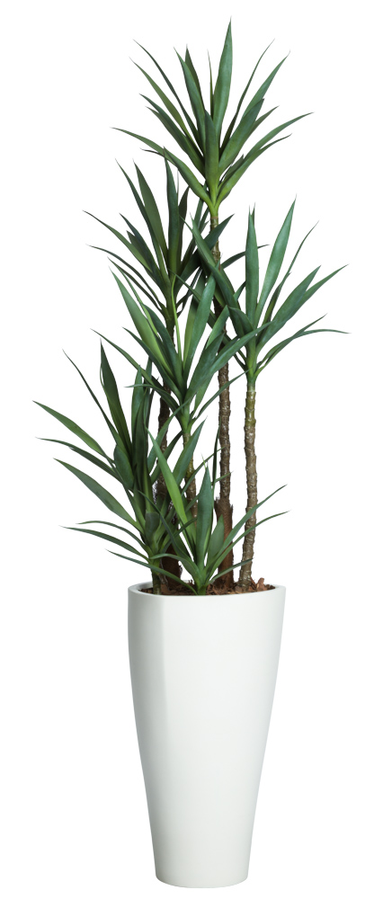7' DLX SKINNY YUCCA IN WHITE TRIANGLE