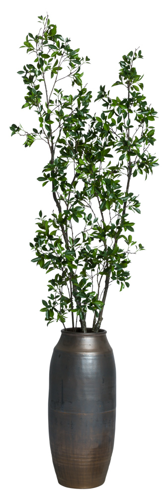 6.5' ASIAN FICUS IN BRONZE POT