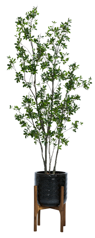 8' ASIAN FICUS IN TEXTURED PLANT STAND