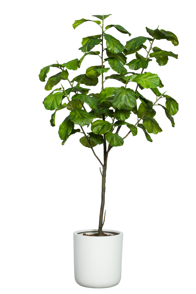 8' FIDDLE FIG/BASKET