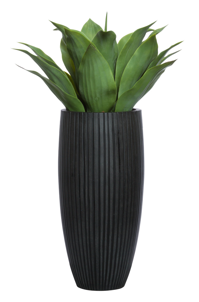 LARGE AGAVE IN BLACK SANDSTONE RIBBED POT