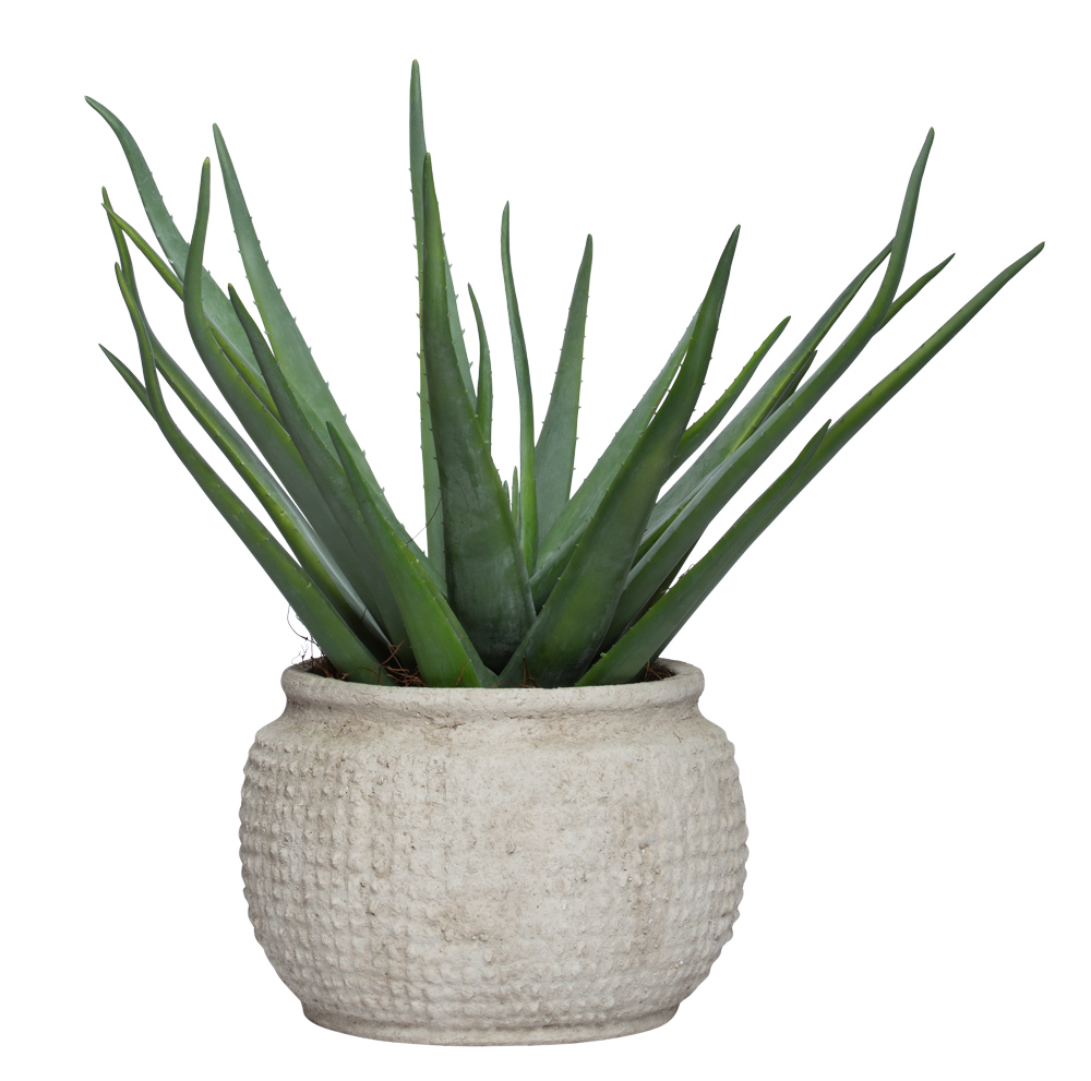 ALOE IN LARGE BEIGE POT