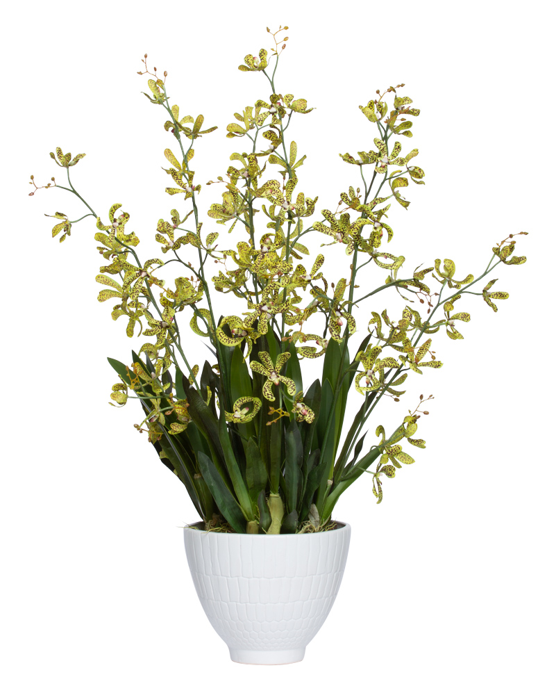 GREEN ORCHID IN LARGE WHITE BOWL