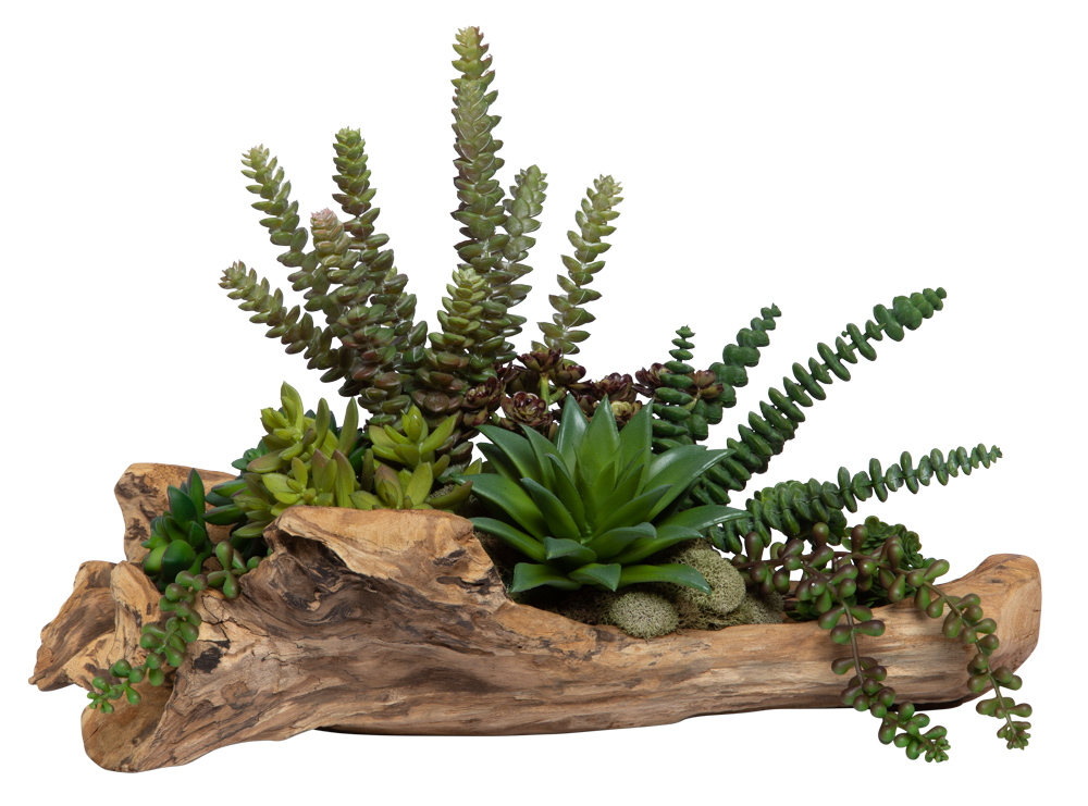 ASST SUCCULENT IN WOOD PLANTER