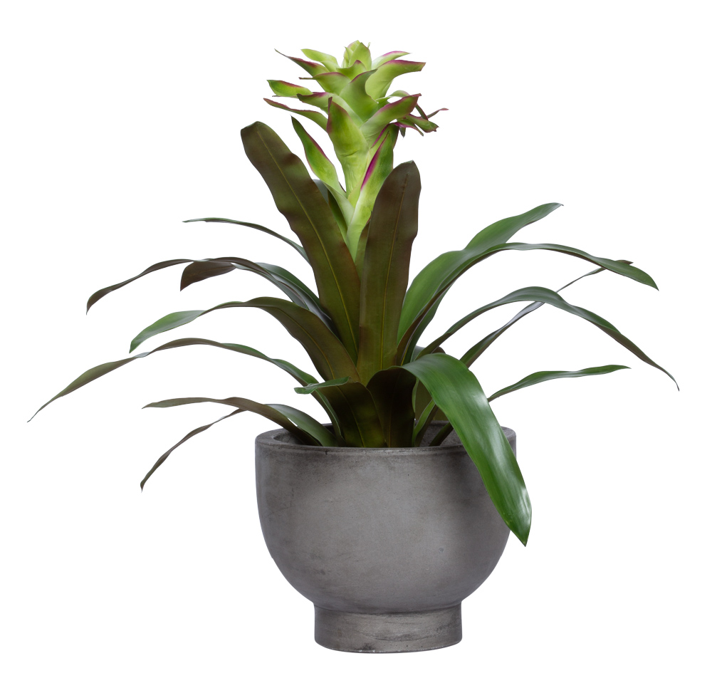 GREEN BROMELIAD IN GREY POT