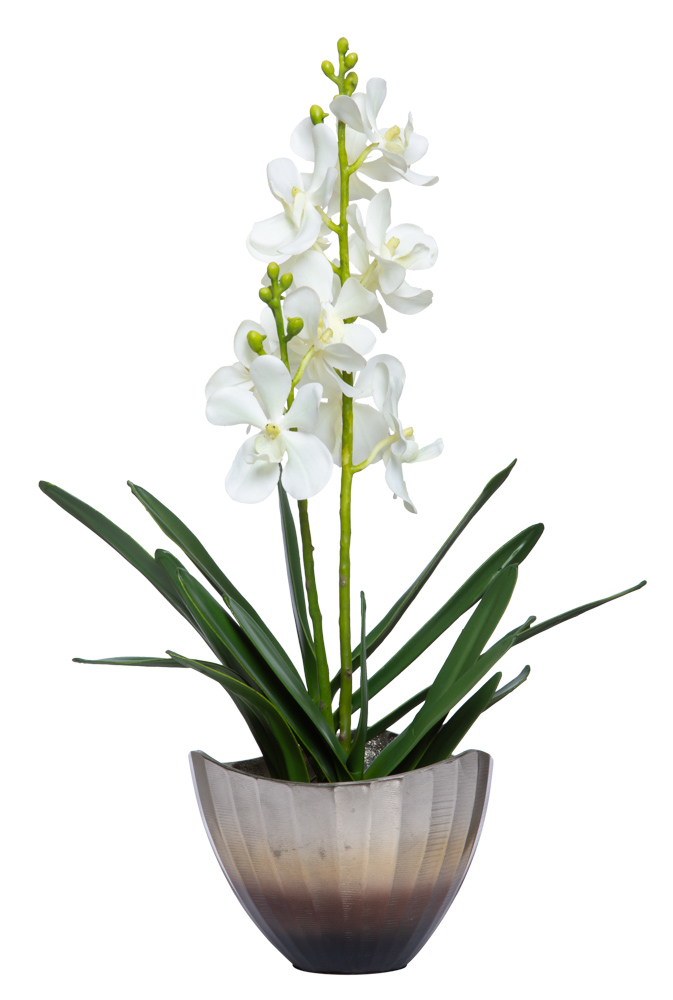 VANDA ORCHID IN SMALL BOWL